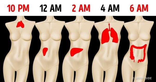 """Sáng nào cũng tỉnh giấc vào đúng """"khung giờ"""" này thì chứng tỏ phổi, thận của bạn đang kêu cứu, cần theo dõi kỹ để tránh biến chứng - Ảnh 1."""